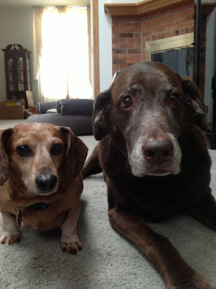 Together in Doggie Heaven now- (photo by Sheri Postma)